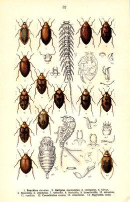Noen arter vanntråkkere